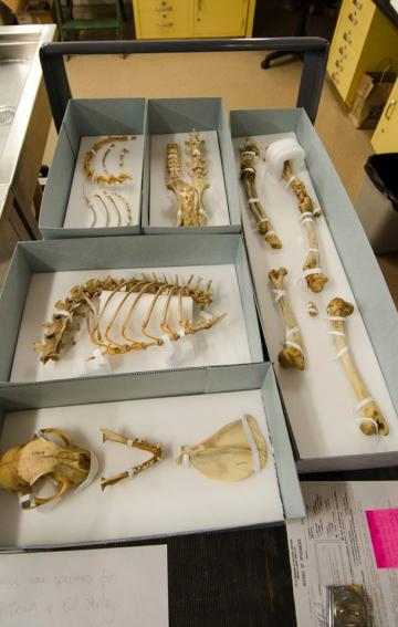 bones in boxes